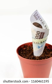 Concept financial investment and planning with Nigerian Naira notes. 500 naira note in a flower pot isolated on a white background