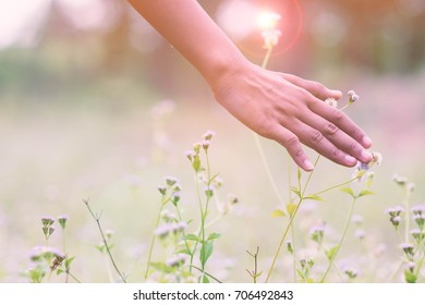 Concept of freedom with hand and meadow.