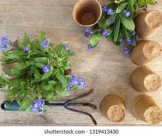 concept of gardening in spring