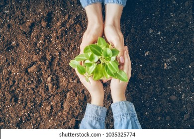 Concept of generation and development. Adult and child are holding in hands seedlings. Spring, nature, eco and care.