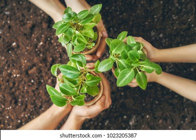 Concept of generation and development. Adults and child are holding in hands seedlings. Spring, nature, eco and care.