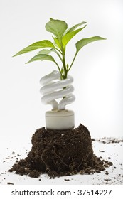 Concept - Going Green - A plant sprouts up through an energy efficient lamp