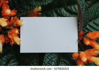 Concept With Green Leaves And  White paper card with place for design. - Copy space ,Hipster style picture and vintage color