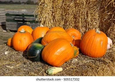 The concept of Halloween with various pumpkins on a bale of hay