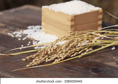 Concept of harvesting rice.