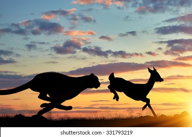 Concept of hunting. Silhouette of a cheetah running after a gazelle at sunset