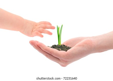 Concept image of a older hand handing sprout to the younger next generation.