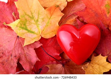 concept of love autum with a red heart and autum leaves