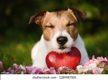 Concept of love with dog, red heart and rose petals on grass