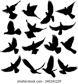 Concept of love or peace. Set of silhouettes of doves. illustration.