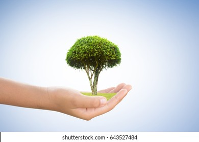 Concept love the world.tree in human hand.Plant trees for the world