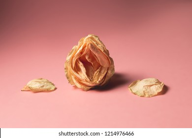 The concept of low libido. Wilted rose on pastel background