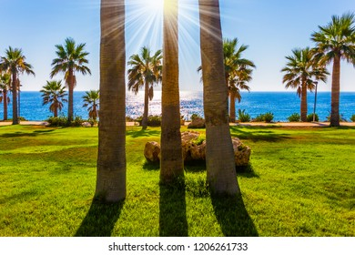 The concept of luxury holiday seashore. Picturesque palm grove on the beach. Sunset on the Mediterranean Sea