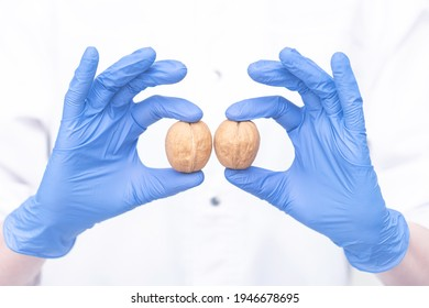 concept of male testicles. the doctor demonstrates the symbol of male health.