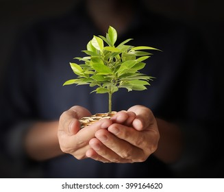 Concept of money plant growing from coins in hand