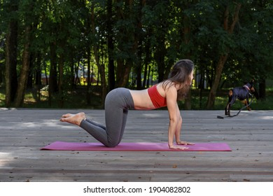concept of morning yoga with your pet. Doberman dog is happy to play sports together with the owner, friendship. Yogi woman doing morning exercises on a wooden terrace outdoor with her puppy.