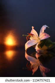 The concept of mourning. White lily flowers on a dark background. We remember, we mourn. Selective focus, close-up, side view, copy space.