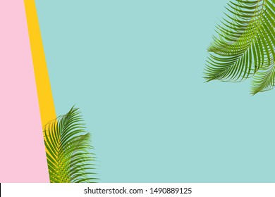 The concept of natural coconut leaves on a pastel background