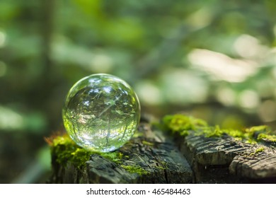 the concept of nature, green forest. Crystal ball on a wooden stump with leaves. Glass ball on a wooden stump covered with moss.