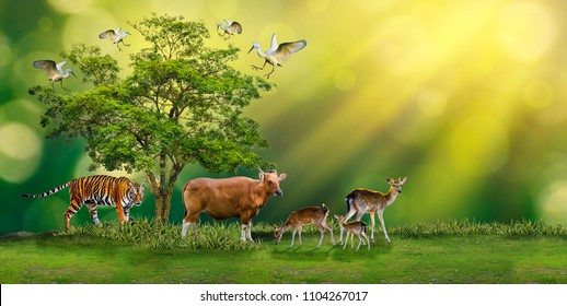 Concept Nature reserve conserve Wildlife reserve tiger Red cow Deer Global warming Food Loaf Ecology Human hands protecting the wild and wild animals tigers deer, trees in the hands green background