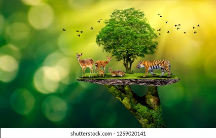 Concept Nature reserve conserve Wildlife reserve tiger Deer Global warming Food Loaf Ecology Human hands protecting the wild and wild animals tigers deer, trees in the hands green background Sun light