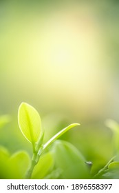 Concept nature view of green leaf on blurred greenery background in garden and sunlight with copy space using as background natural green plants landscape, ecology, fresh wallpaper concept.