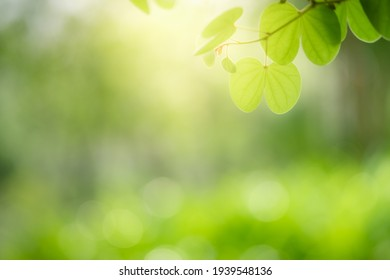 Concept nature view of green leaf on blurred greenery background in garden and sunlight with copy space using as background natural green plants landscape, ecology, fresh wallpaper.