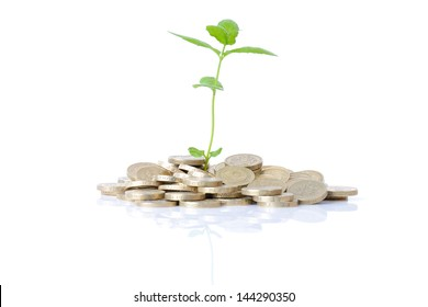 concept of new money growth a budding plant growing in coins isolated on white background