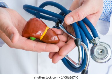Concept photo diagnostics and treatment of diseases of liver and gallbladder. Doctor dressed in white lab coat in one hand holds figure of liver or hepar, in another twisted stethoscope photo close up
