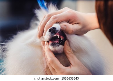 The concept of popularizing grooming haircuts and caring for dogs. cleaning and care of dog's canine teeth