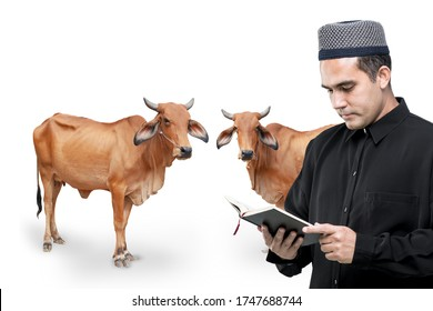Concept Qurban, Beautiful brown cows and Muslim middle-aged Asian men are praying and making early blessings in the Qurban ceremony in Islam on the eid mubarak.