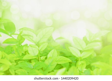 Concept relaxation and natural healing,close-up light green leaves and sunlight,blurred backgrounds,beautiful nature bokeh in park,copy space for text input,use backdrop decorate website or wallpaper