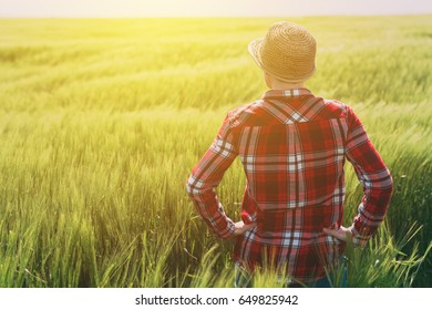 Concept of responsible farming, female farmer in cereal crops field, woman agronomist looking over the wheat field to the horizon on a windy day and planning future steps in agricultural production
