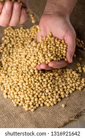Concept of rich soybeans harvest