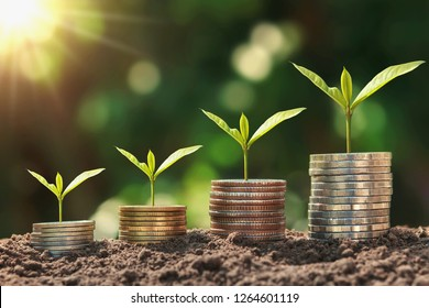 concept saving money. plant growing step with coins stack on dirt and sunshine in nature