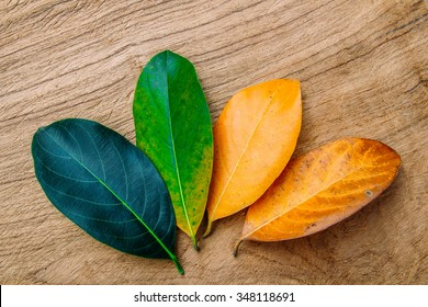 Concept season change of leaves