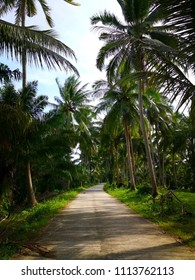 The concept of serenity of the countryside. Empty concreate road, which is the entrance to the rural village in Thailand. The two sides of the road filled with coconut trees amidst green lawn.
