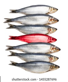 Concept  showing traditional english red herring idiom