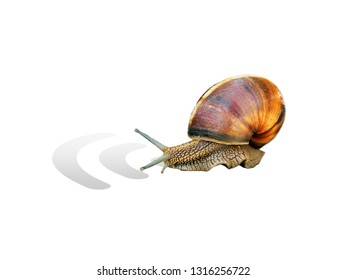 Concept of slow wifi connection. Snail isolated on white background, wifi sign. Speed in the modern network Internet