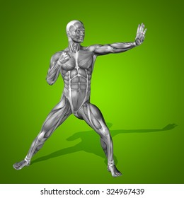Concept strong human or man 3D anatomy body with muscle for health sport on green background for medicine, sport, male, muscular, medical, health, medicine, biology, anatomical, strong fitness design