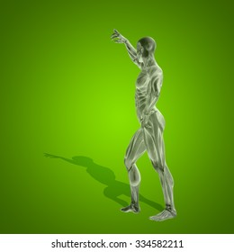 Concept strong human man 3D anatomy body with muscle for health sport over green background for medicine, sport, male, muscular, medical, health, medicine, biology, anatomical, strong fitness design