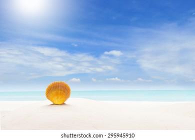 Concept Summer. Sea Shell on Sandy Beach