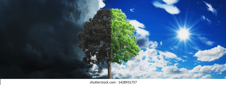 concept tree growing and dry with sky and sun background