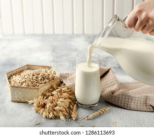 The concept of a vegetarian diet. Oat milk in the glass with jug of oat milk and oat and oat ears. Light background