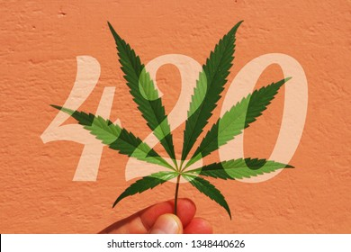Concept of World cannabis day 420. Cannabis leaf in hand and the numbers 4 20 on an orange background.