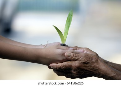 Conceptual close up environment photo ,Hands of elderly man and baby holding a young plant against a green natural background in spring. Ecology concept .