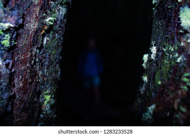 conceptual dark scary forest with blurring man shrouded in darkness, mossy forest trees with eery white light at night, scary forest with dark figure,