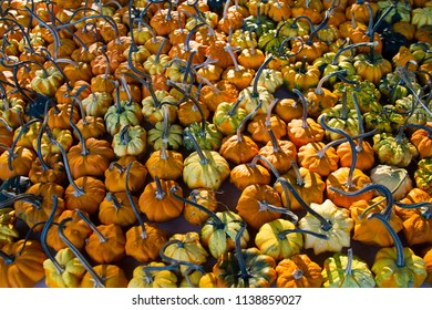Conceptual image of Autumn harvest with many pumpkins,
