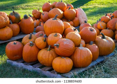 Conceptual image of Autumn harvest with many big pumpkins laid out on grass.