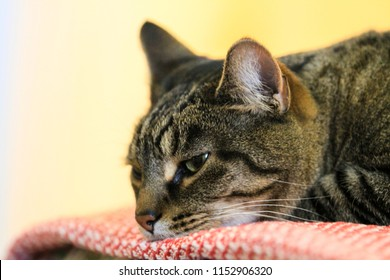 Conceptual image of feeling down. A cat looking down.